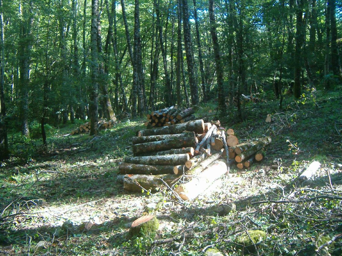 Avviamento bosco vetusto