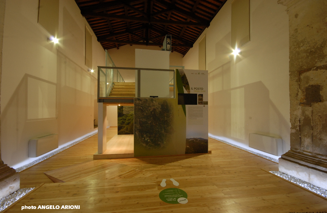 Museo Dell'ulivo)_00056